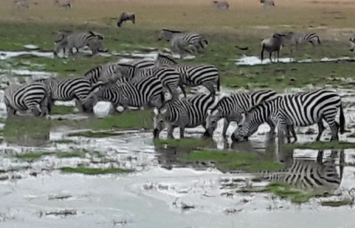 2 Days Lake Mburo Wildlife Safari, Uganda Safari Tours